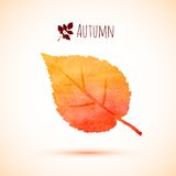 Autumn orange watercolor leaf icon Royalty Free Stock Image