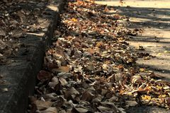 Autumn orange and yellow color leaves on pedestrian passage cement roads during season change. Soft focus.  stock photo