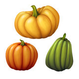 Autumn orange yellow and green pumpkins, seasonal illustration isolated on white background Stock Image