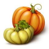 Autumn orange yellow green pumpkins, seasonal illustration isolated on white background. Autumn orange yellow and green pumpkins, seasonal illustration isolated Stock Photography