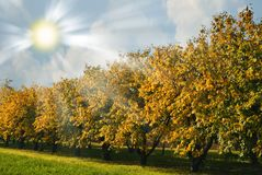 Autumn Orchard Royalty Free Stock Photo