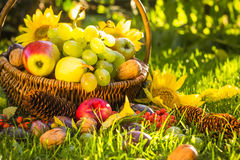 Autumn orchard basket fresh fruit sunlight Royalty Free Stock Images