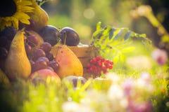 Autumn orchard fruit crops grass sunset. Autumn in the orchard: fruit crops in the grass at sunset stock image