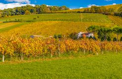 Autumn orchards Royalty Free Stock Image