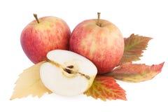 Autumn organic Apples Royalty Free Stock Photos