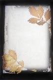 Autumn organic frame Royalty Free Stock Photo
