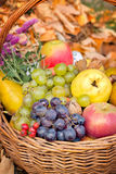 Autumn organic fruits Stock Photography