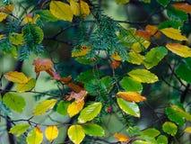 Autumn ornament Stock Image