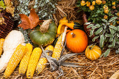 Autumn ornament with pumkins and corn Royalty Free Stock Photo