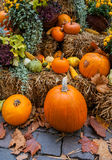 Autumn ornament with pumkins Stock Images