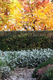 Autumn ornamental garden Stock Photography