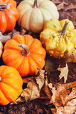 Autumn ornamental pumpkin collection Stock Image