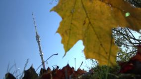 Autumn. Ostankino TV Tower. stock video footage