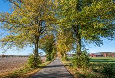 Autumn in Ostergotland, Sweden. Tree lined avenue outside Linkoping in the countryside of Ostergotland during autumn in Sweden Stock Image