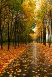 Autumn in our park. Stock Photography
