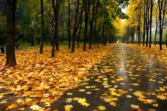 Autumn in our park. Autumn in our city. Walk in park Royalty Free Stock Image