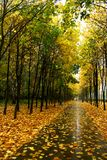 Autumn in our park. Autumn in our city. Walk in park Royalty Free Stock Photos