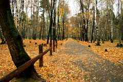 Autumn in our park. Walk in autumn park Royalty Free Stock Images