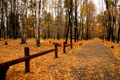 Autumn in our park. Walk in autumn park Royalty Free Stock Photography