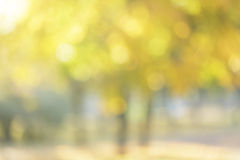 Autumn out of focus background Stock Images