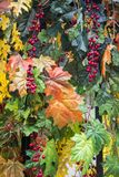 Autumn outdoor artificial decorations after rain. Colorful maple leaves,flowers and hawthorn berries at a sunny Indian summer day. Autumn outdoor artificial stock image