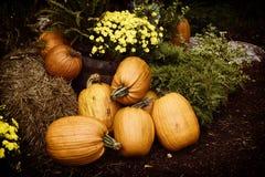 Autumn Outdoor Decor - nostalgic 2. Autumn decor. Pumpkins, chrysanthemum, hay, ferns, and Juniper bushes arranged in a outdoor display. Nostalgic processing stock images