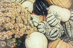 Autumn Outdoor Decor - nostalgic 6. Autumn decor. Pumpkins, squash, gourds, and chrysanthemums arranged in a fall outdoor display. Bleached nostalgic processing stock image