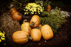 Autumn Outdoor Decor - nostalgische 2 Stock Afbeeldingen