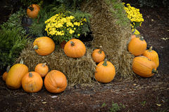 Autumn Outdoor Decor 1. Autumn decor. Pumpkins, chrysanthemum, and hay arranged in a outdoor display stock images