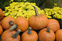 Autumn Outdoor Decor - vibrant 2. Autumn decor. Pumpkins and chrysanthemums arranged in a lovely outdoor fall display stock photo