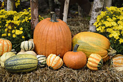 Autumn Outdoor Decor - vibrant 3. Autumn decor. Pumpkins, squash, gourds, chrysanthemums, and hay arranged in a fall outdoor display stock photography