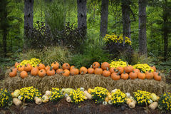 Autumn Outdoor Decor - vibrant 1. Autumn decor in a woodland setting. Pumpkins, squash, gourds, chrysanthemums, hay, and juniper bushes arranged in a fall royalty free stock photo