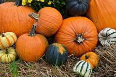 Autumn Outdoor Decor - 4 vibrantes Fotos de Stock Royalty Free