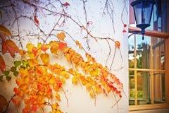 Autumn outside Royalty Free Stock Photos
