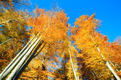 Autumn over the forest Royalty Free Stock Photography