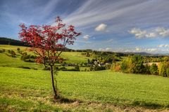 Autumn over the valley. Autumn scenery with a lone tree above the valley Stock Photos