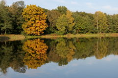 Autumn over the water. The photo shows a water reservoir. Its shores are covered with deciduous trees. It is autumn, some leaves took on a yellow and brown Royalty Free Stock Image