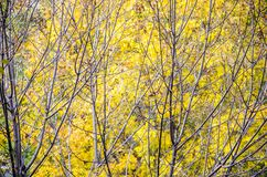 Autumn is over, winter is coming Royalty Free Stock Photo