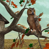 Autumn Owl. 3D digital render of an owl sitting on the autumnal maple tree Stock Photos