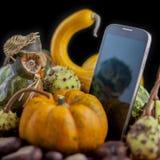 Autumn owlphone Stock Images