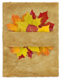 Autumn_Package. Autumn leaves between old paper background Royalty Free Stock Image