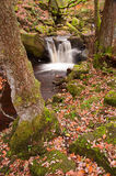 Autumn in Padley Gorge in Peak District Royalty Free Stock Image