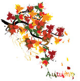 Autumn painted card Royalty Free Stock Photography