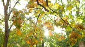 Autumn leaves glowing stock video