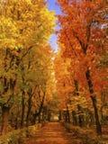 Autumn painting Stock Photo