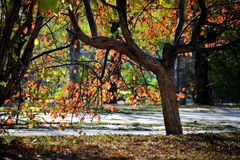 Autumn paints Stock Image