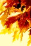 Autumn paints Royalty Free Stock Images