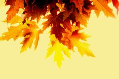 Free Autumn Paints Stock Photography - 6678422