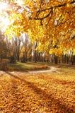 Autumn paints Stock Photos