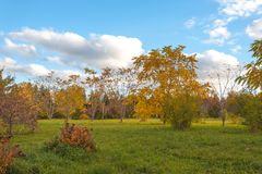 Autumn paints in the park. Autumn paints please eyes of visitors to the arboretum of Pereslavl-Zalessky Royalty Free Stock Photography